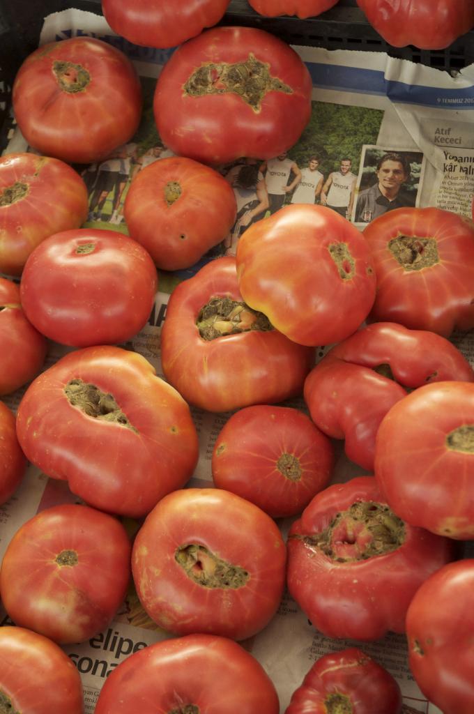 tomates : 0,40 € le kilo