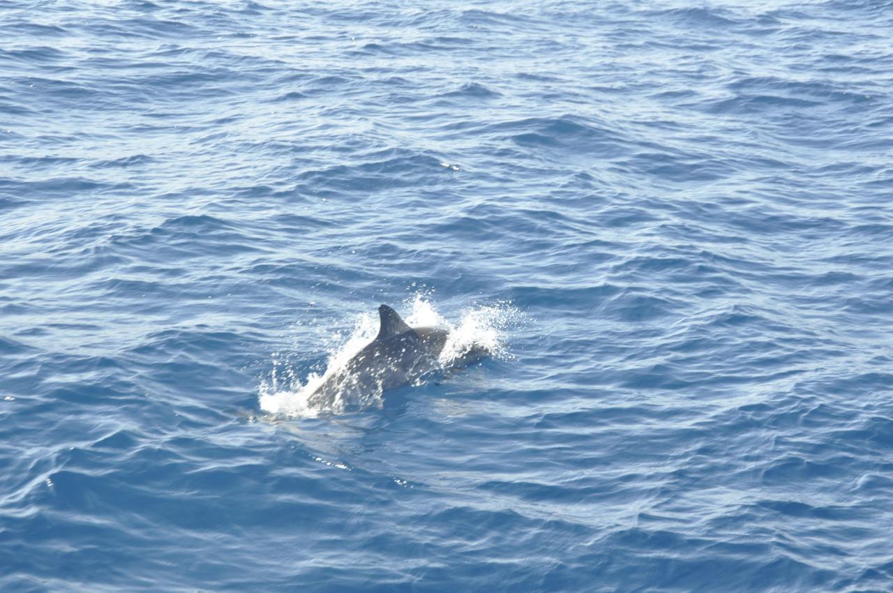 enfin un dauphin...!