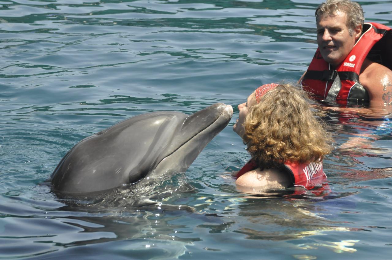 2013 nage avec les dauphins