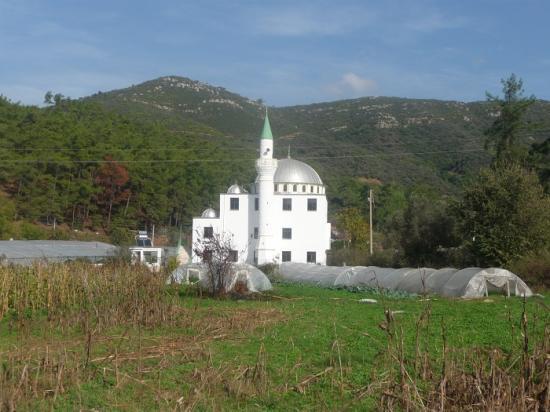 une mosquée en plein champ