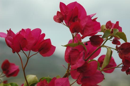 les fleurs de madame...
